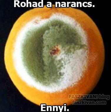 The orange is rotting. That's all / faszkivar.blog.hu